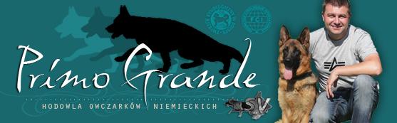 PRIMO GRANDE - Hodowla Owczarków Niemieckich